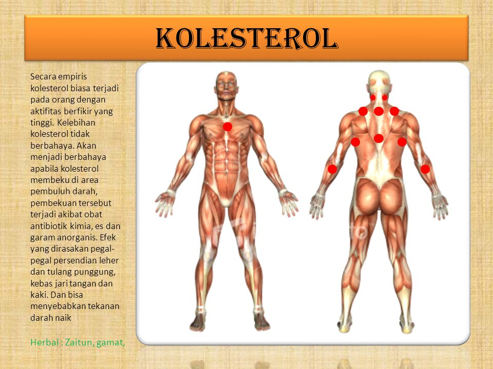 KOLESTEROL Herbal : Zaitun, gamat,