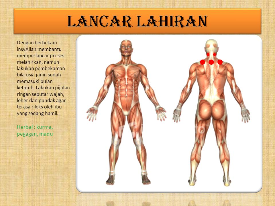 LANCAR LAHIRAN Herbal : kurma, pegagan, madu
