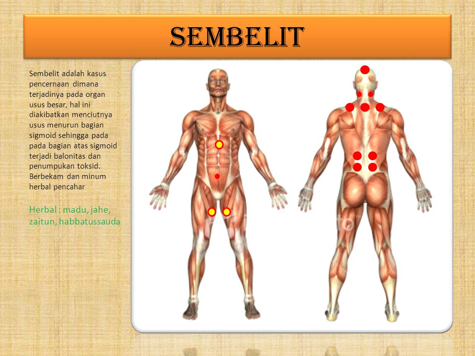 SEMBELIT Herbal : madu, jahe, zaitun, habbatussauda