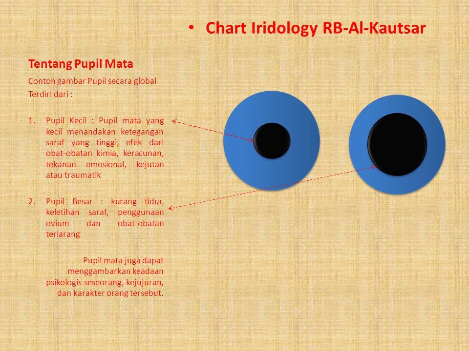 Chart Iridology RB-Al-Kautsar