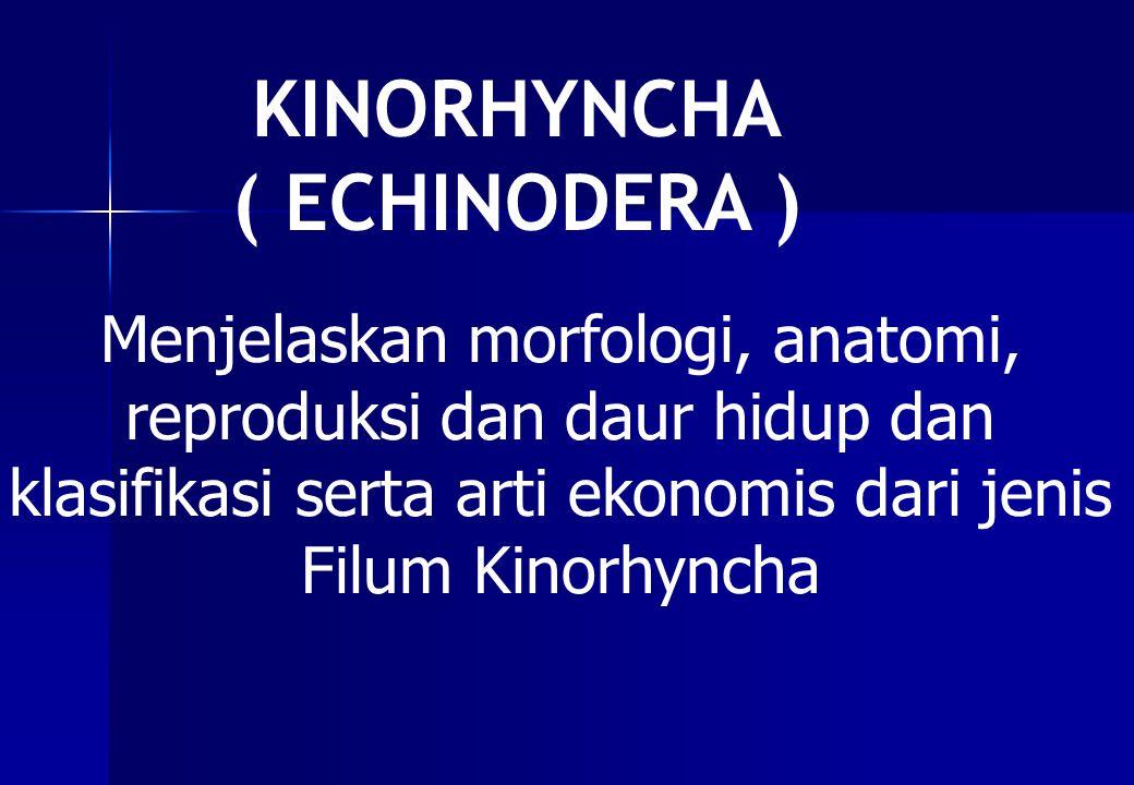 KINORHYNCHA ( ECHINODERA )