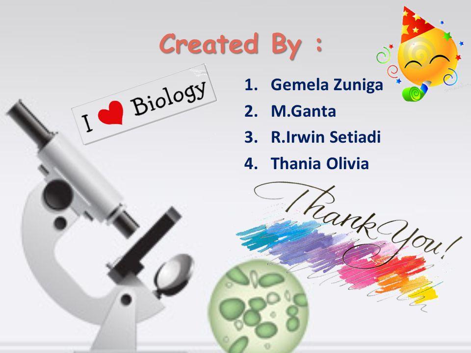 Created By : Gemela Zuniga M.Ganta R.Irwin Setiadi Thania Olivia