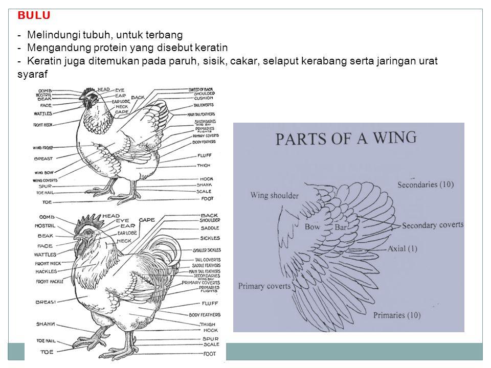BULU Melindungi tubuh, untuk terbang. Mengandung protein yang disebut keratin.