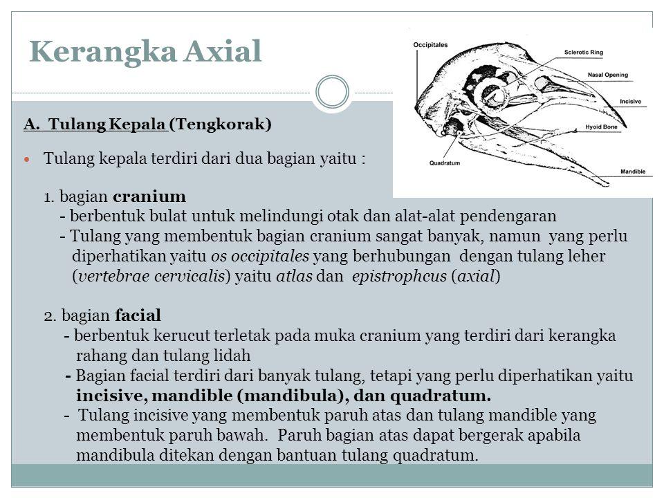 Kerangka Axial Tulang kepala terdiri dari dua bagian yaitu :
