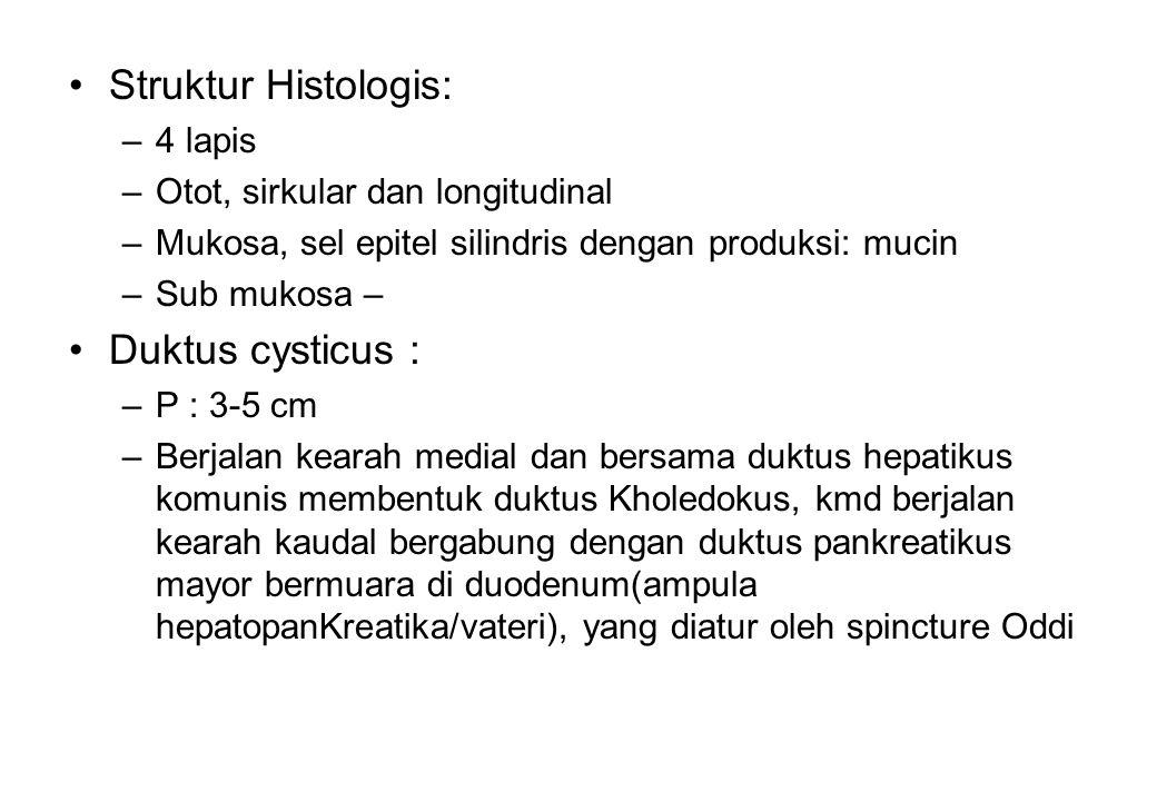 Struktur Histologis: Duktus cysticus : 4 lapis