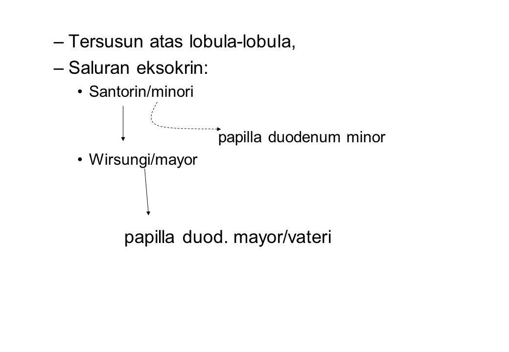 Tersusun atas lobula-lobula, Saluran eksokrin:
