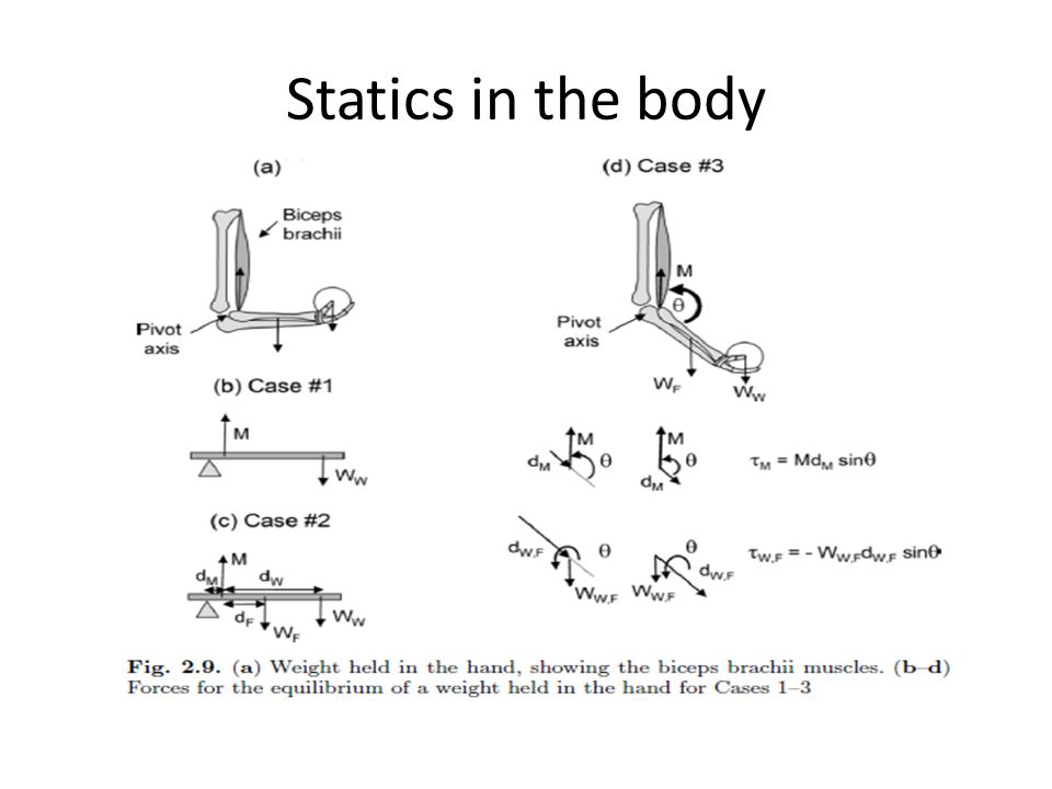 Statics in the body