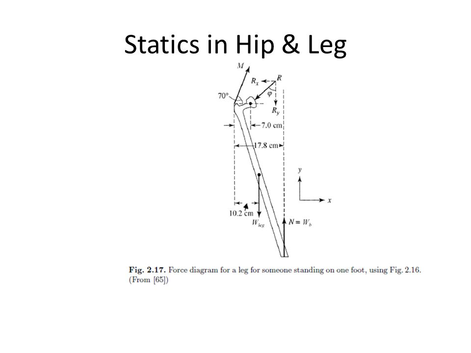 Statics in Hip & Leg