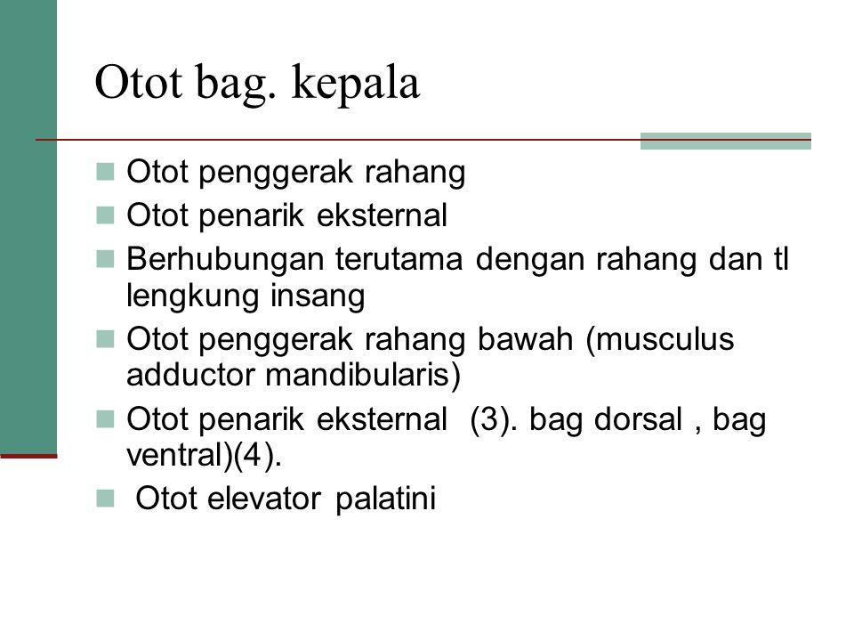 Otot bag. kepala Otot penggerak rahang Otot penarik eksternal