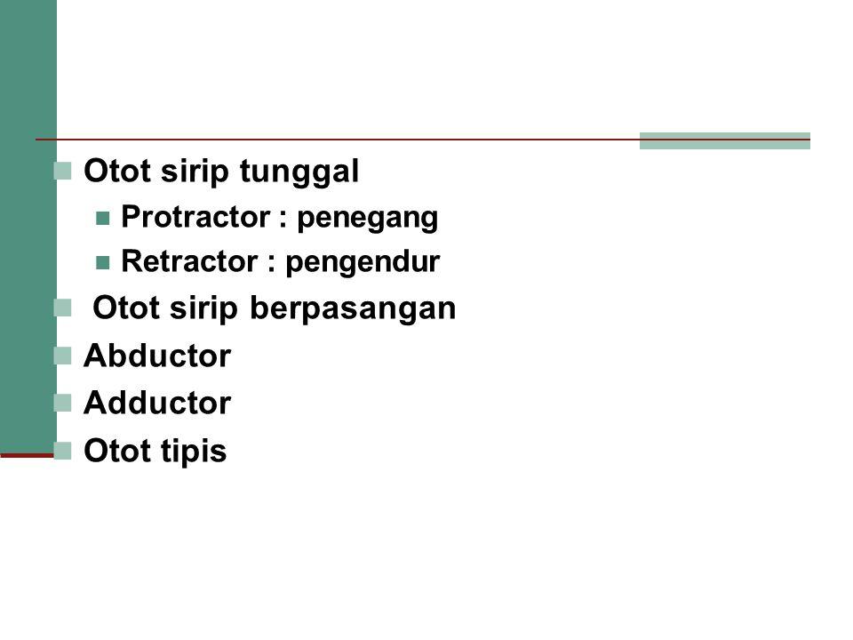 Otot sirip berpasangan Abductor Adductor Otot tipis