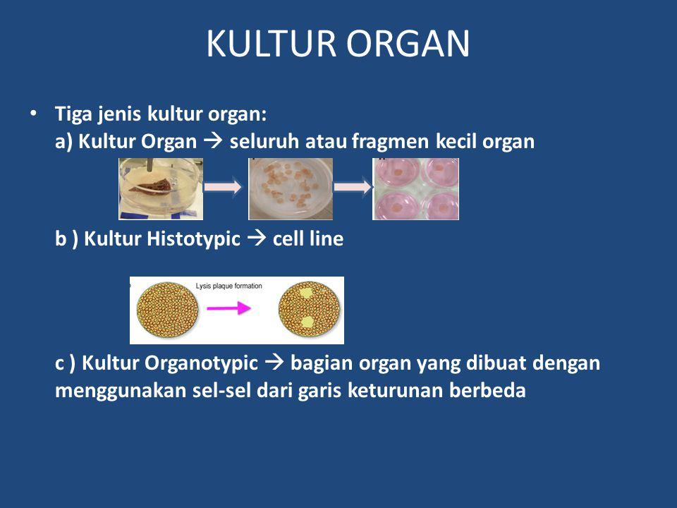 KULTUR ORGAN Tiga jenis kultur organ: a) Kultur Organ  seluruh atau fragmen kecil organ. b ) Kultur Histotypic  cell line.