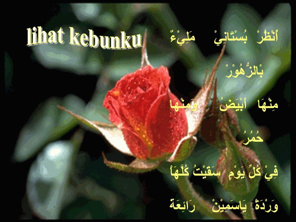 lihat kebunku أُنْظُرْ بُسْتَانِيْ مَلِيْءٌ بْالزُّهُوْرْ مِنْهَا أَبْيَضُ وَمِنْهَا حُمُرُ فِيْ كُلِّ يَوْمٍ سَقَيْتُ كُلَّهَاْ
