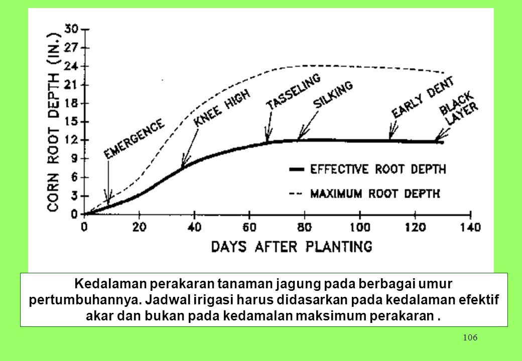 Kedalaman perakaran tanaman jagung pada berbagai umur pertumbuhannya