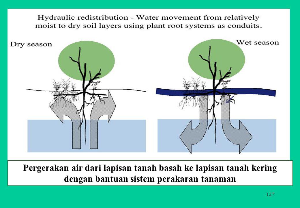 Pergerakan air dari lapisan tanah basah ke lapisan tanah kering dengan bantuan sistem perakaran tanaman