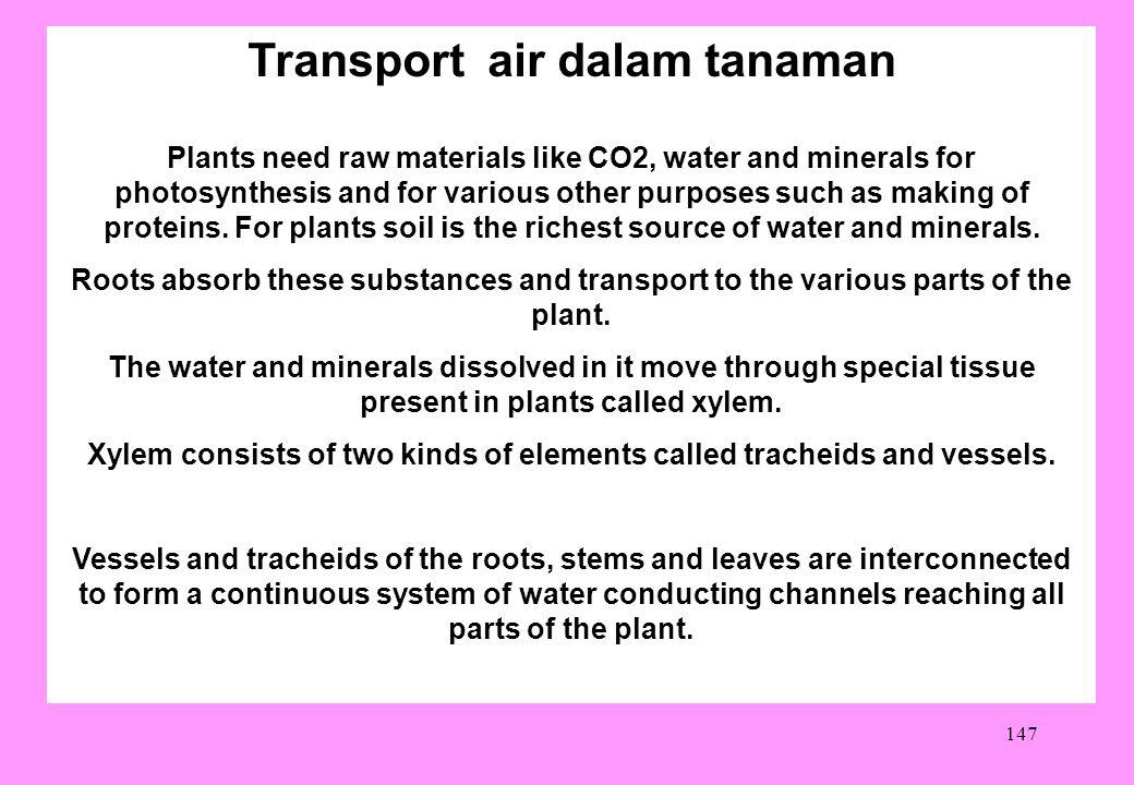 Transport air dalam tanaman
