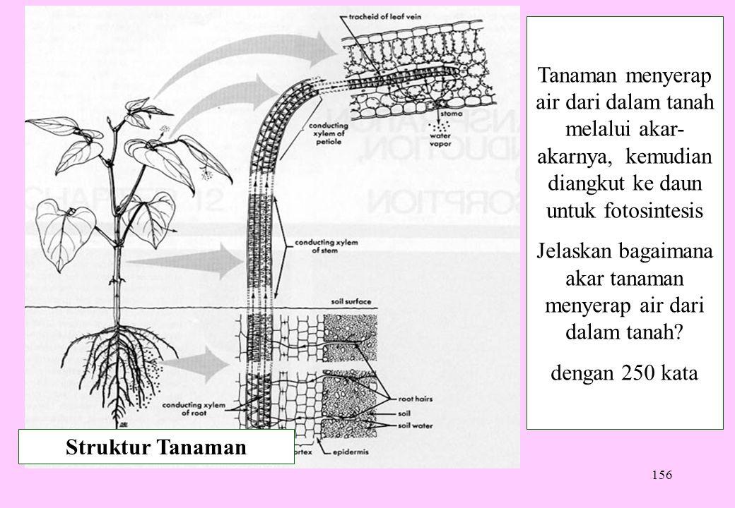 Jelaskan bagaimana akar tanaman menyerap air dari dalam tanah