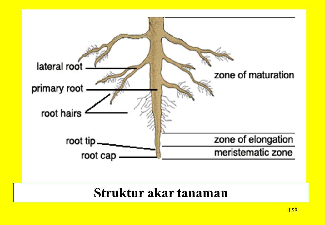 Struktur akar tanaman
