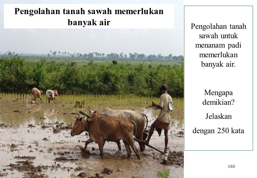 Pengolahan tanah sawah memerlukan banyak air
