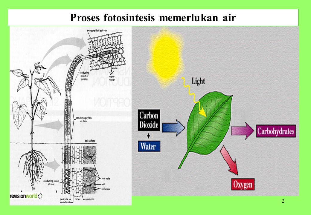 Proses fotosintesis memerlukan air