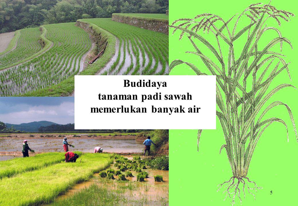 tanaman padi sawah memerlukan banyak air