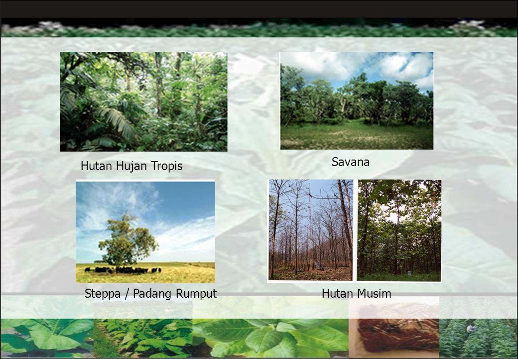 Savana Hutan Hujan Tropis Steppa / Padang Rumput Hutan Musim