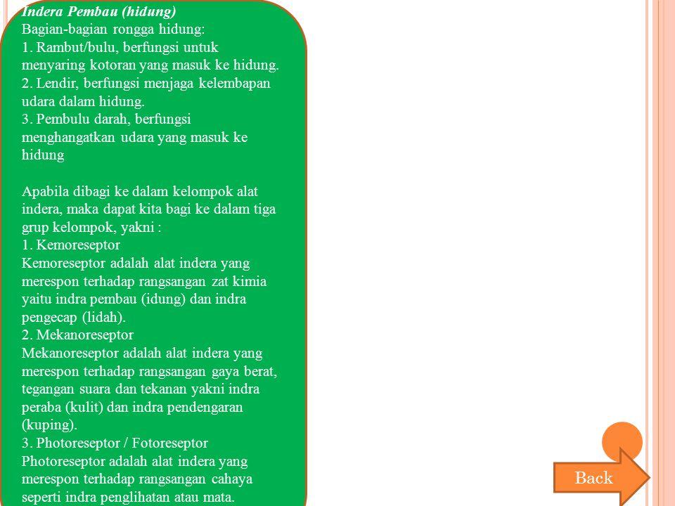 Back Indera Pembau (hidung) Bagian-bagian rongga hidung: