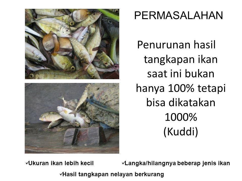 PERMASALAHAN Penurunan hasil tangkapan ikan saat ini bukan hanya 100% tetapi bisa dikatakan 1000% (Kuddi)