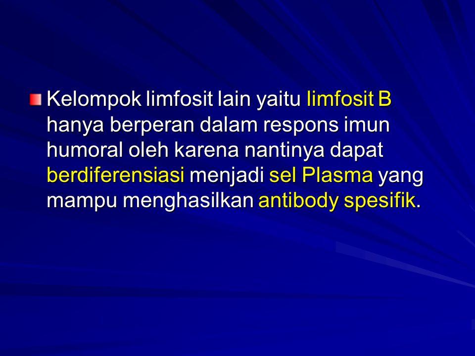 Kelompok limfosit lain yaitu limfosit B hanya berperan dalam respons imun humoral oleh karena nantinya dapat berdiferensiasi menjadi sel Plasma yang mampu menghasilkan antibody spesifik.