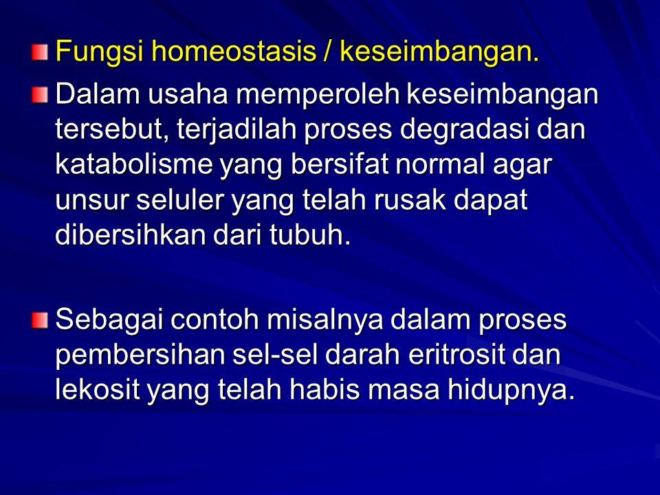 Fungsi homeostasis / keseimbangan.