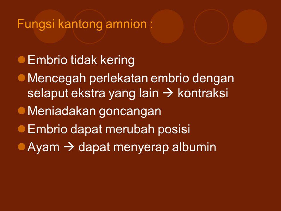 Fungsi kantong amnion :