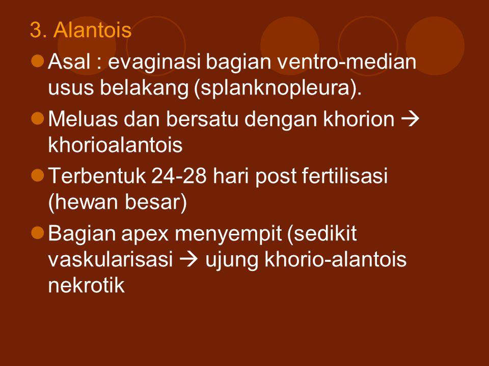 3. Alantois Asal : evaginasi bagian ventro-median usus belakang (splanknopleura). Meluas dan bersatu dengan khorion  khorioalantois.