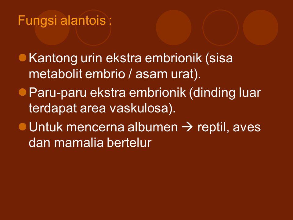 Fungsi alantois : Kantong urin ekstra embrionik (sisa metabolit embrio / asam urat).
