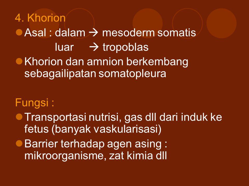 4. Khorion Asal : dalam  mesoderm somatis. luar  tropoblas. Khorion dan amnion berkembang sebagailipatan somatopleura.