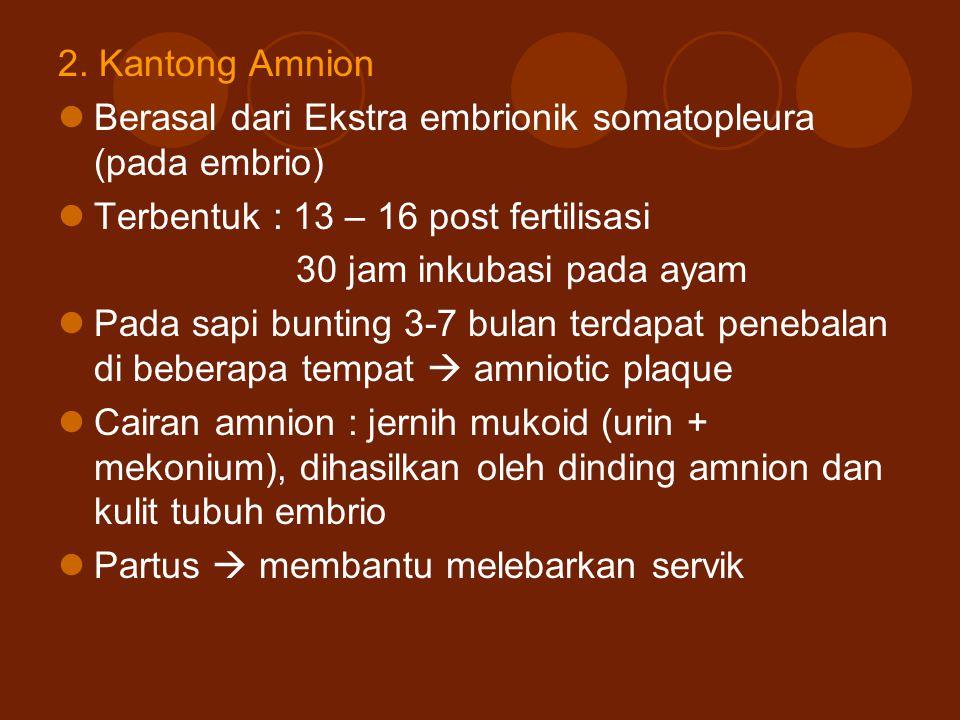 2. Kantong Amnion Berasal dari Ekstra embrionik somatopleura (pada embrio) Terbentuk : 13 – 16 post fertilisasi.