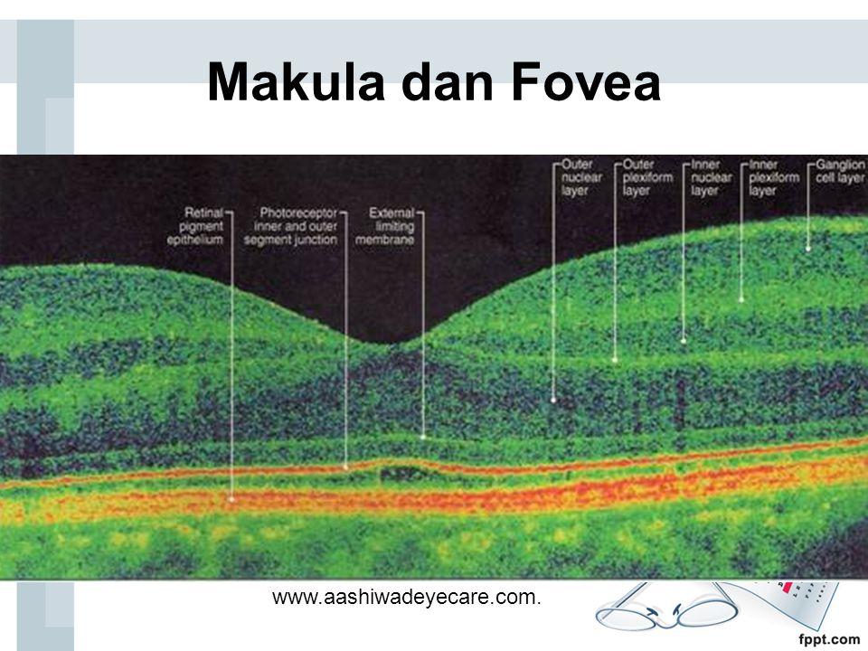 Makula dan Fovea www.aashiwadeyecare.com.