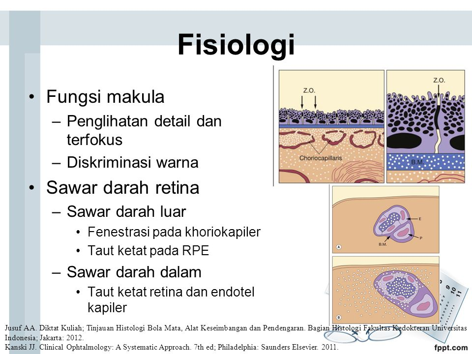 Fisiologi Fungsi makula Sawar darah retina