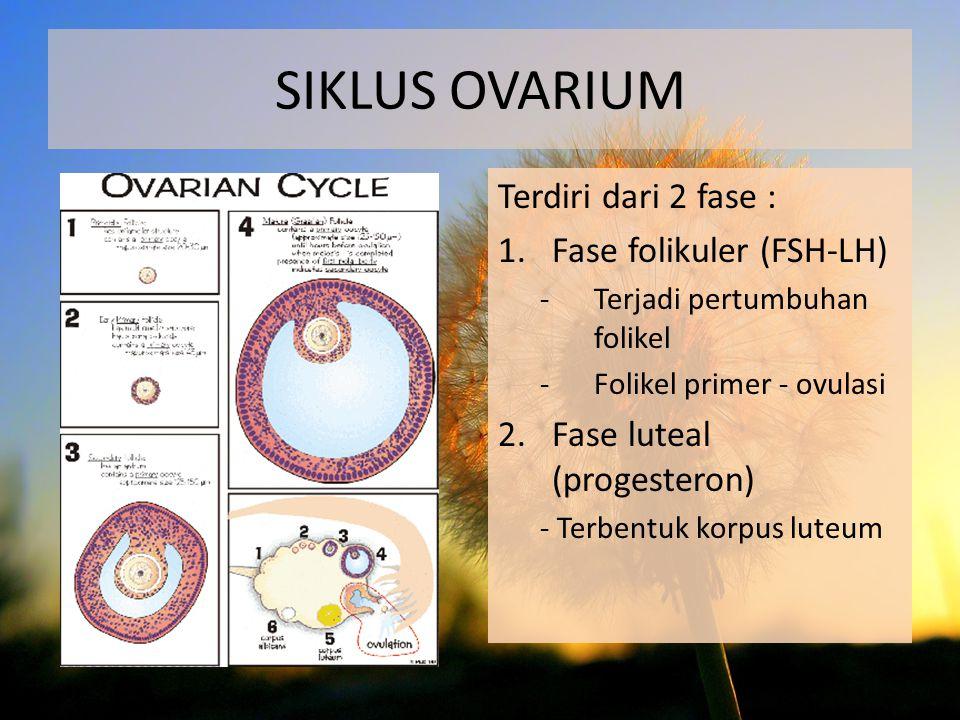 SIKLUS OVARIUM Terdiri dari 2 fase : Fase folikuler (FSH-LH)