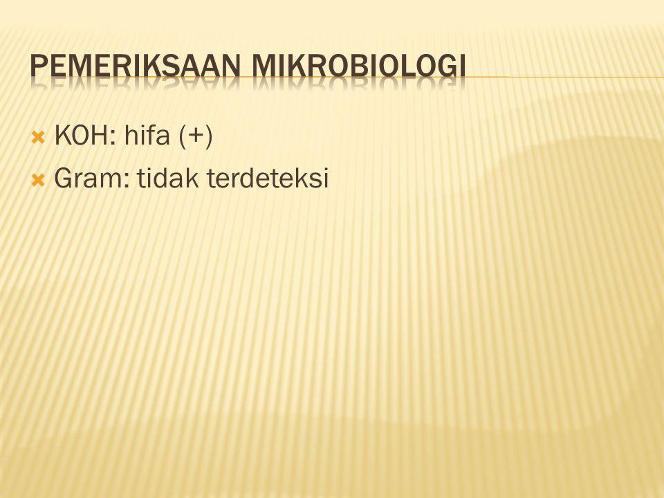 Pemeriksaan mikrobiologi