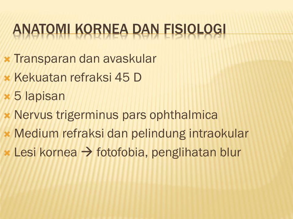 Anatomi kornea dan fisiologi