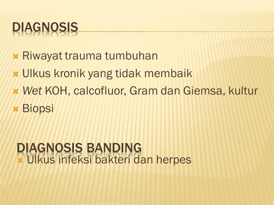 diagnosis Diagnosis banding Riwayat trauma tumbuhan