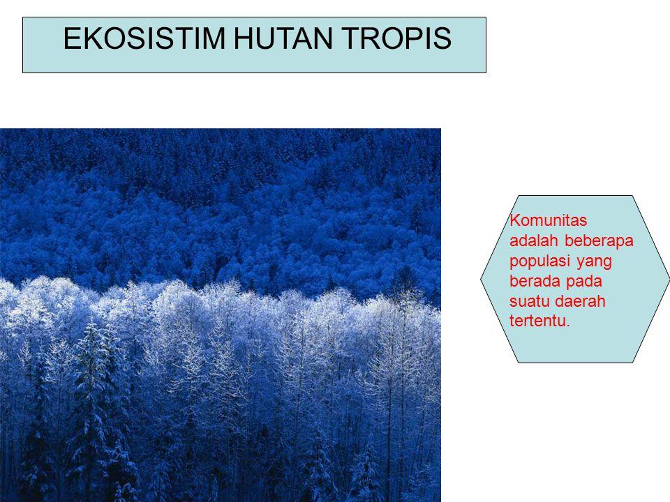 EKOSISTIM HUTAN TROPIS