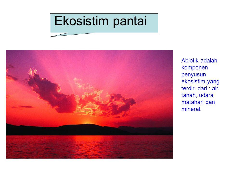 Ekosistim pantai Abiotik adalah komponen penyusun ekosistim yang terdiri dari : air, tanah, udara matahari dan mineral.