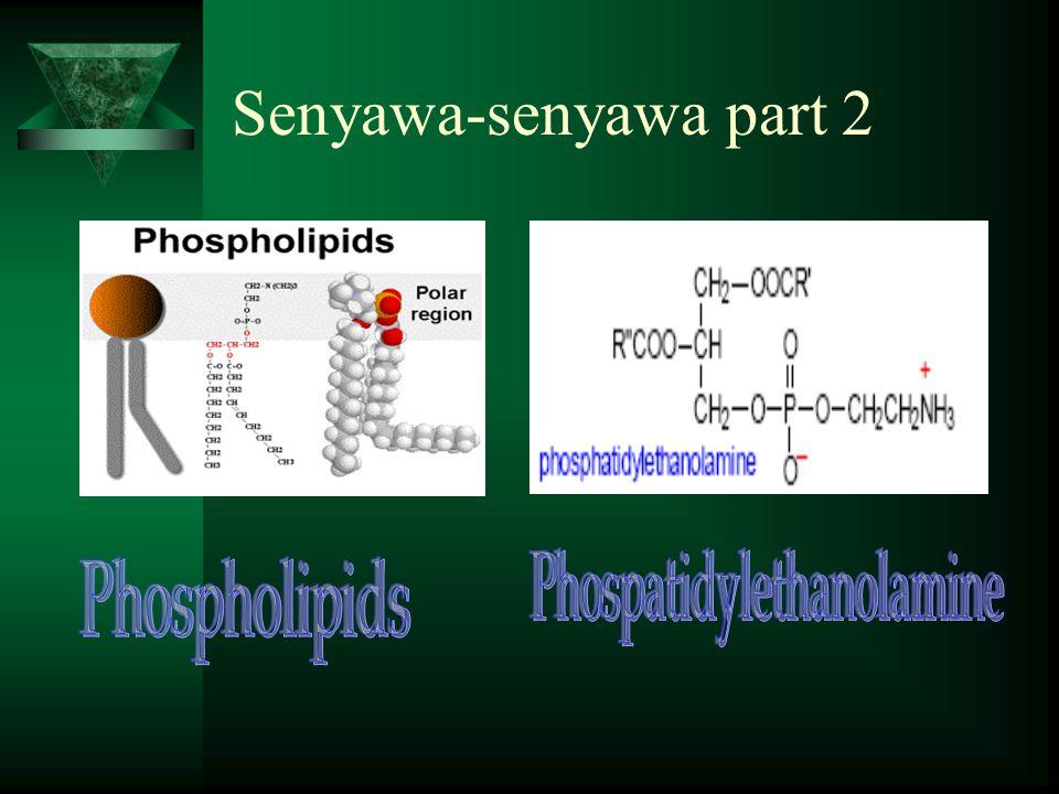 Phospatidylethanolamine