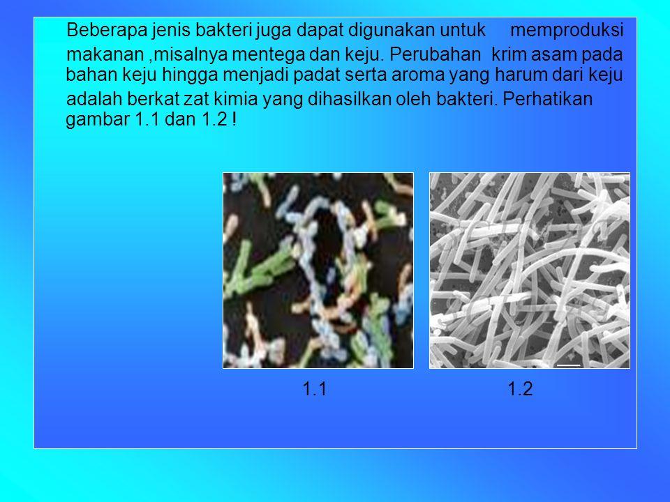 Beberapa jenis bakteri juga dapat digunakan untuk memproduksi