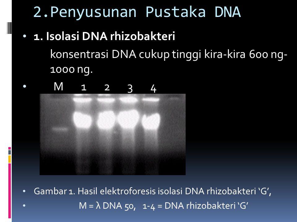 2.Penyusunan Pustaka DNA