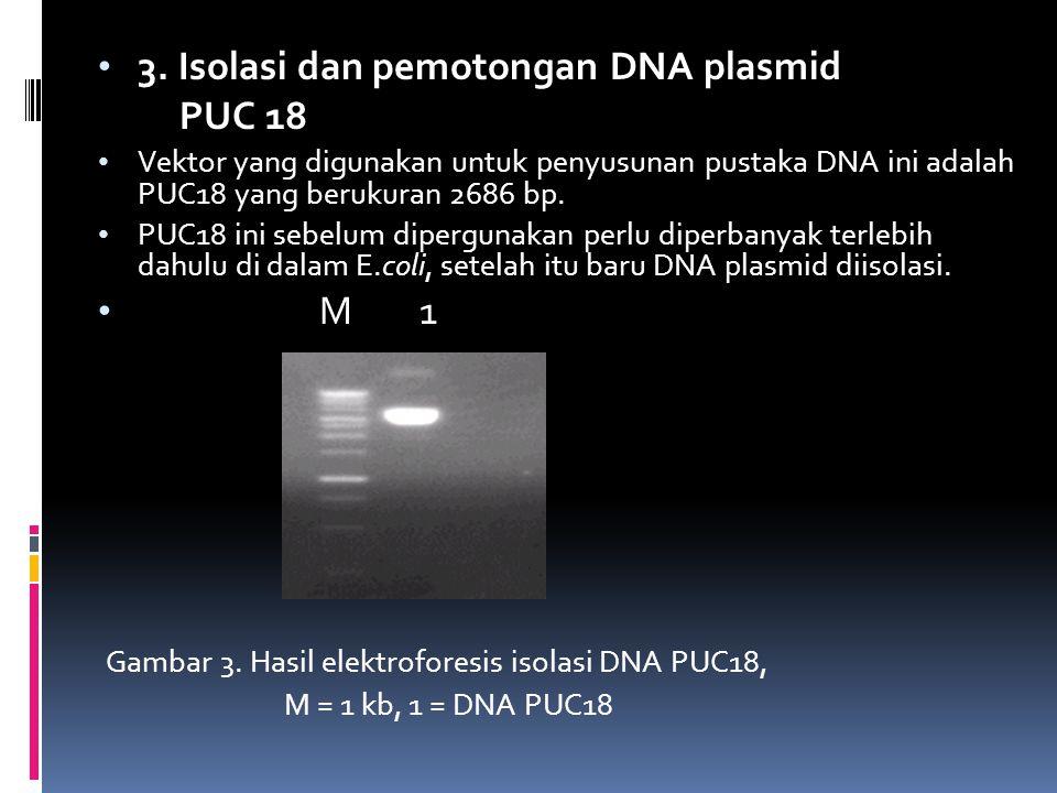 3. Isolasi dan pemotongan DNA plasmid PUC 18