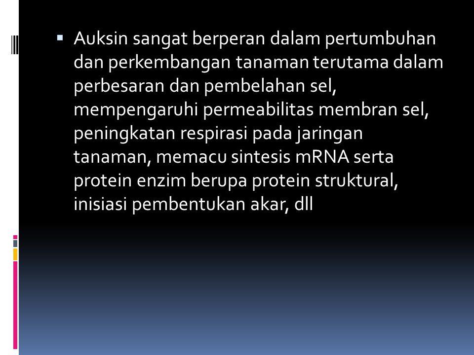 Auksin sangat berperan dalam pertumbuhan dan perkembangan tanaman terutama dalam perbesaran dan pembelahan sel, mempengaruhi permeabilitas membran sel, peningkatan respirasi pada jaringan tanaman, memacu sintesis mRNA serta protein enzim berupa protein struktural, inisiasi pembentukan akar, dll
