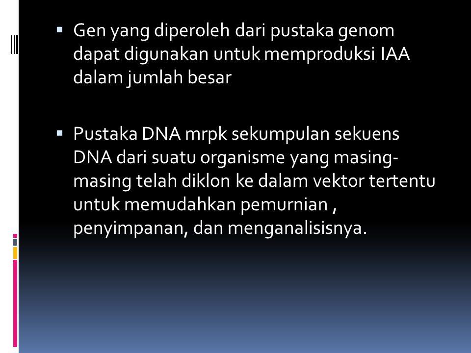 Gen yang diperoleh dari pustaka genom dapat digunakan untuk memproduksi IAA dalam jumlah besar