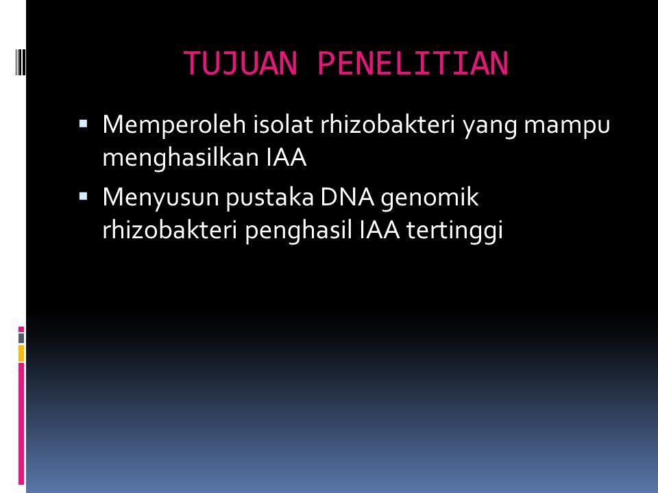 TUJUAN PENELITIAN Memperoleh isolat rhizobakteri yang mampu menghasilkan IAA.