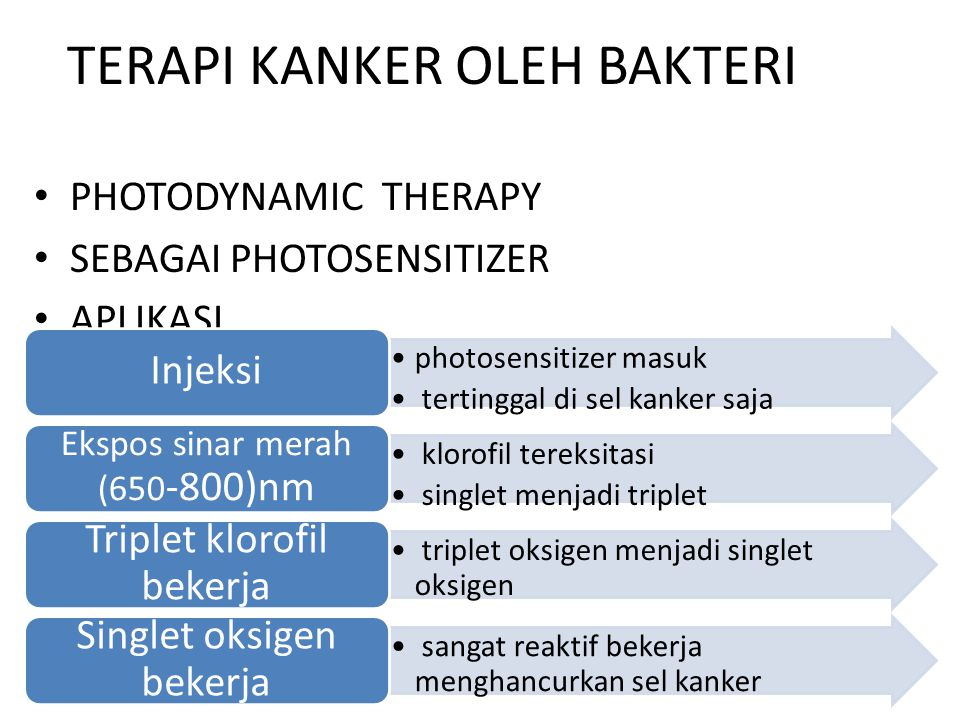 TERAPI KANKER OLEH BAKTERI